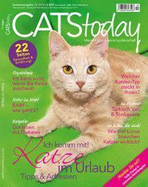 katze macht pipi ins bett cats today magazin