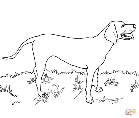 Coloring Pages Of Coon Dogs | redbone coonhound coloring page free printable coloring