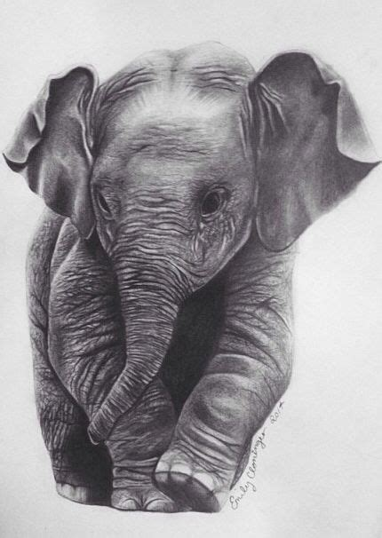 baby elephant drawing by emily cloninger www ecloningerart