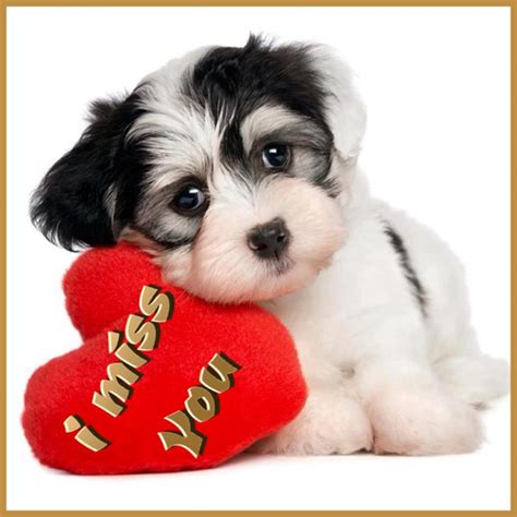 i miss you puppy i miss you pictures images photos