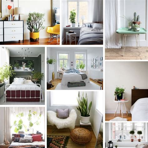 bedroom plants 197 best bedroom plants images on pinterest bedroom
