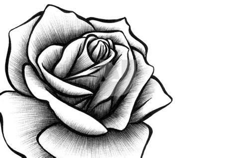 open rose tattoo open pencil and in color open