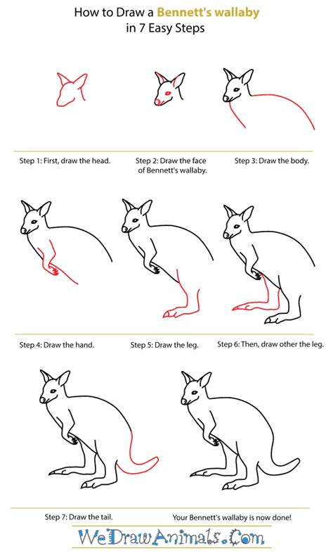 wallaby tutorial how to draw a bennett s wallaby