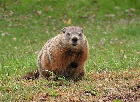 groundhog day quarry related keywords suggestions for serious gopher