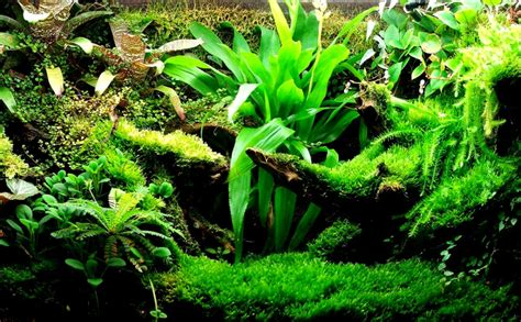 aquarium design wallpaper freshwater aquarium wallpaper hd amazing wallpapers