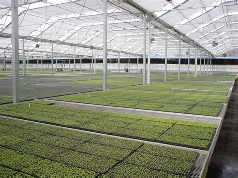 greenhouses in florida nursery florida