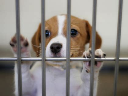 local pet stores that sell puppies best places to adopt puppies and kittens in baltimore