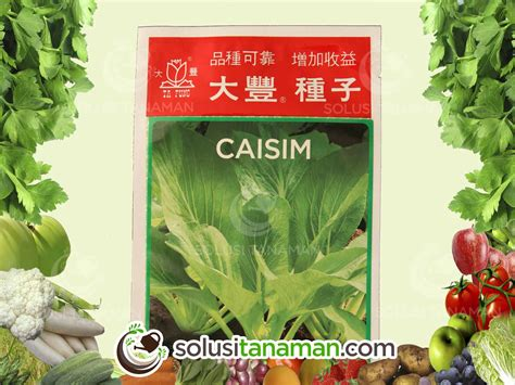 Harga Bibit Sawi Keriting sawi hijau caisim 20gr bibit benih tanaman sayur