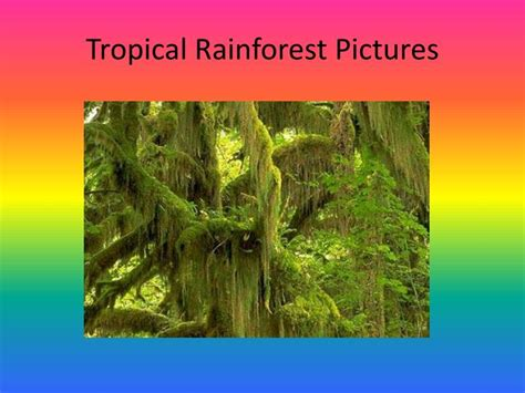 Ppt The Tropical Rainforest Biome Powerpoint Rainforest Powerpoint