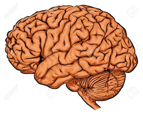 brain clipart brain clipart cliparts