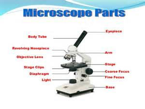 microscope diagram diagram of compound best free