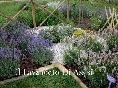 Aiuole Con Cicas by Progetti Giardini Gratis Progetti Giardini Privati