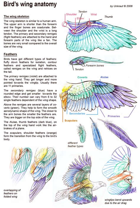 1000 images about wing anatomy on pinterest feathers