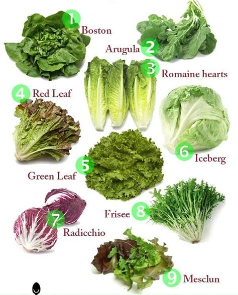 best 25 lettuce types ideas on pinterest types of
