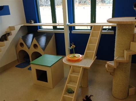 cat rooms best 25 cat room ideas on cat trees cat house diy and cat trees diy easy