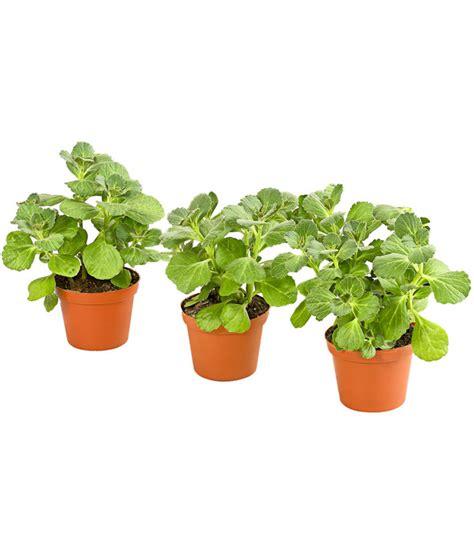Verpiss Dich Pflanze Kaufen 3259 by Verpiss Dich Pflanze Im Set Dehner