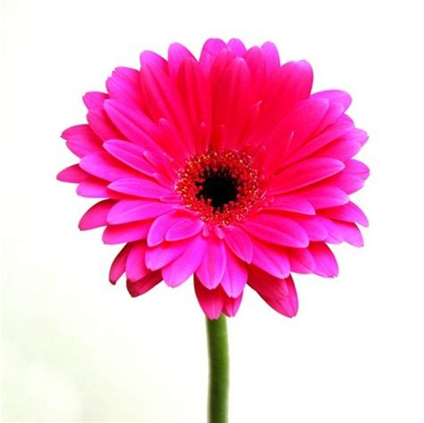 flower image cute pink flower weneedfun