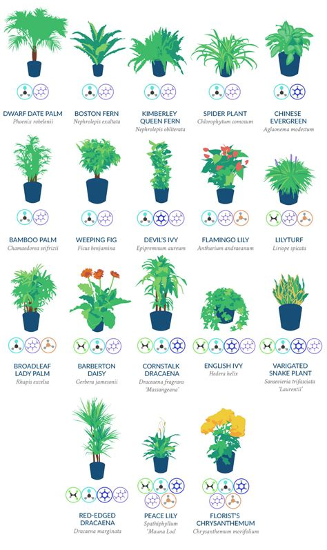 nasa best plants nasa recommended 18 plants to efficiently cleanse the air