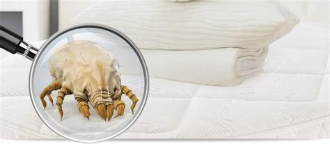 matratzen mit silberfäden milben hausstaubmilben infos zu milben und tipps zum bek 228 mpfen