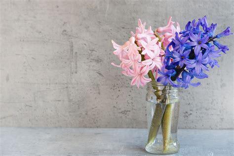 giacinto fiori foto gratis giacinto fiori rosa vaso immagine