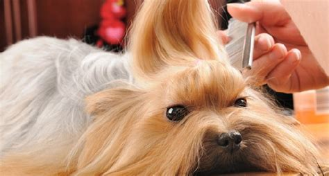 pet haircuts near me mobile dog grooming phoenix affordable pet grooming