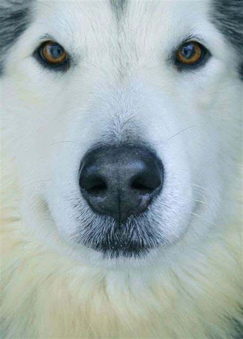 most beautiful breeds top 10 most beautiful breeds breeds picture