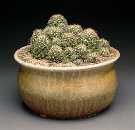 wood fired planter with cactus by mbrownceramics on deviantart