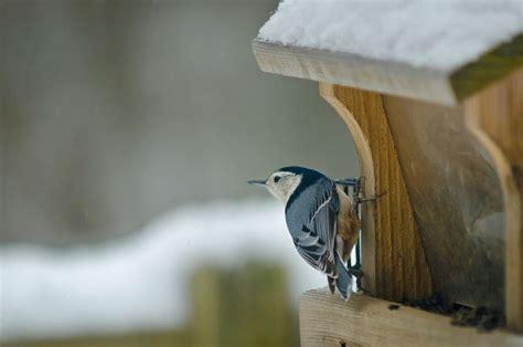 woodworking plans   bird feeder