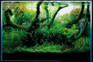 nature aquascape aquascape series t a g