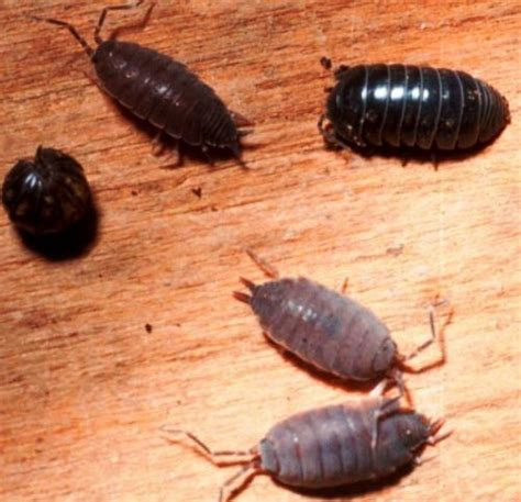 garden pests in the soil identification 73 best images about garden bugs identification