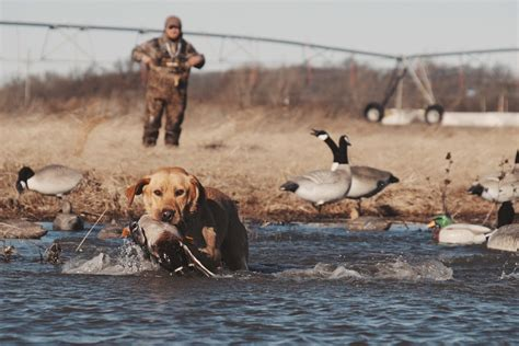 duck hunting boat videos waterfowl hunting videos duck goose hunting