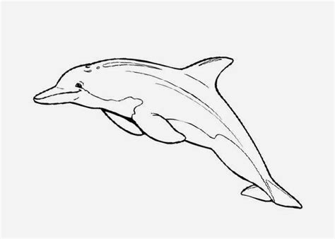 coloring page of bottlenose dolphin 32 best draw dolphins images on pinterest dolphins fish