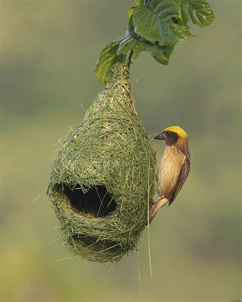 10 totally unusual bird nests from around the world
