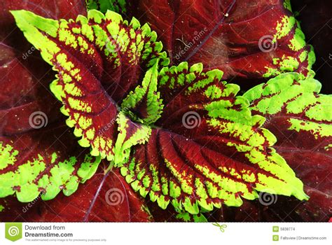 colorful plant leaves stock images image 5838774