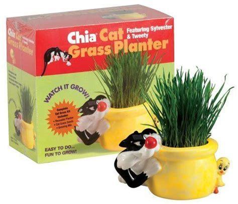 chia cat grass planter featuring sylvester tweety 1 kit