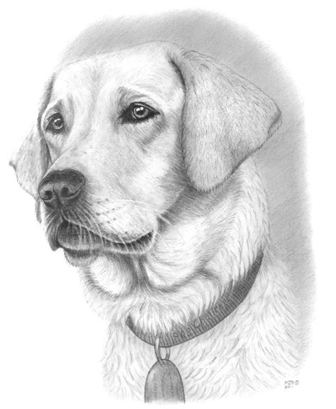 Drawing Dogs by 25 Best Ideas About Drawings On How To