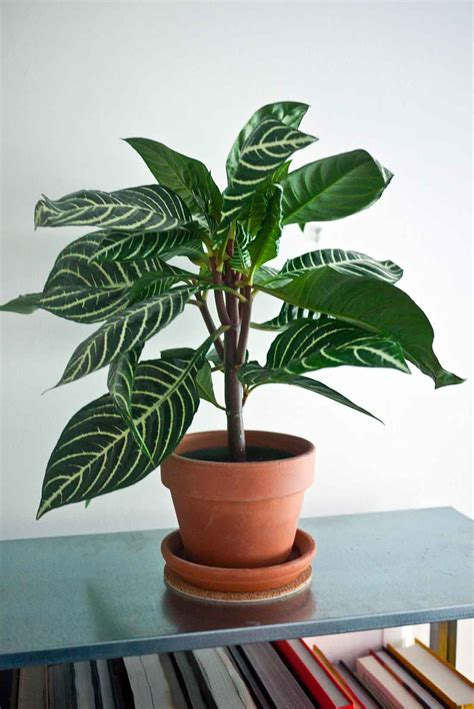 Good House Plants | good house plants most popular plants to grow indoor