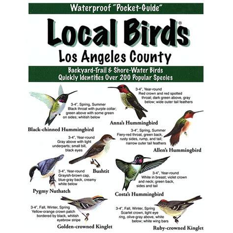 los angeles county local birds