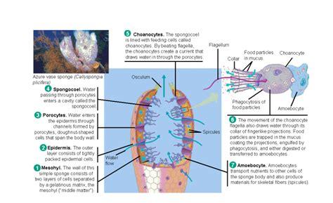 Filter Feeder Definition Biology quiz invertebrate biology
