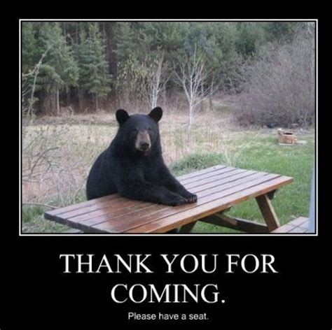 Bear At Picnic Table Meme - 97 best images about funny bears memes and pics on