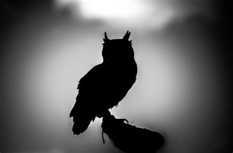 black white silhouette photography animal outlines my black and white photos of animal