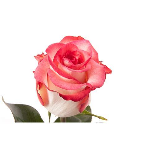 Flowpy Florist Simple 6 Roses Bouquet Multi Colour multi color flower images flowers ideas