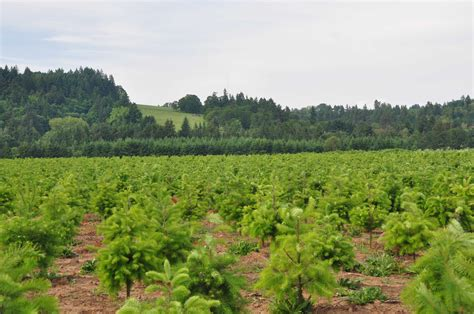 best oregon christmas tree farm tree grower in oregon branches out with nrcs assistance nrcs oregon