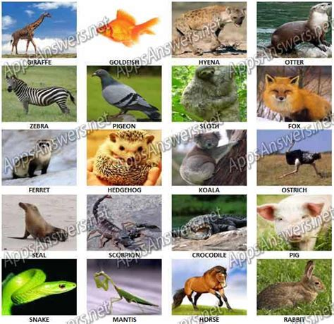 animal quiz 100 pics answers animals pictures to pin on