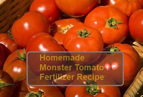 diy tomato fertilizer 1000 images about gardening ideas on gardens