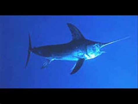 delfini modugno testo delfini domenico e massimo modugno doovi