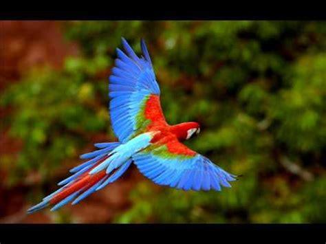 imagenes animales y naturaleza paisajes y animales de naturaleza youtube