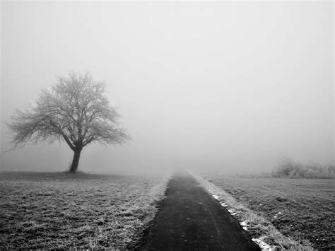 wallpapers for desktop photography wallpapers lonely tree photography wallpapers