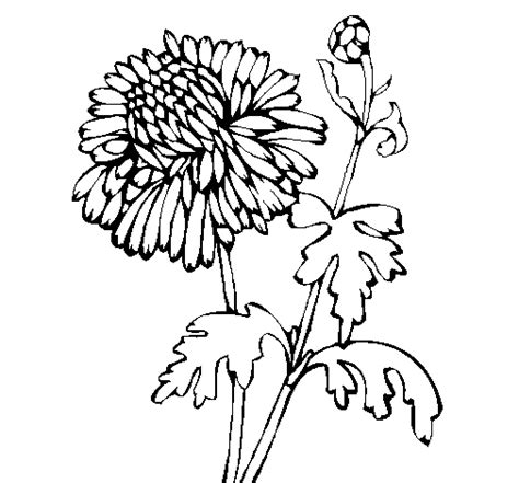 coloring pages zinnia zinni the zinnia coloring page coloring pages