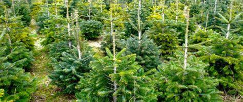 christbaum selber schlagen badisch weihnachtsb 228 ume selbst schlagen ytti de empfehlungsportal gl 252 hwein weihnachtsbaum
